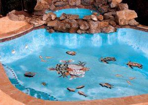 pardosea piscina